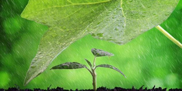 Das Bild zeigt eine kleine Pflanze, die von einer großen Pflanze gegen Regen geschützt wird.